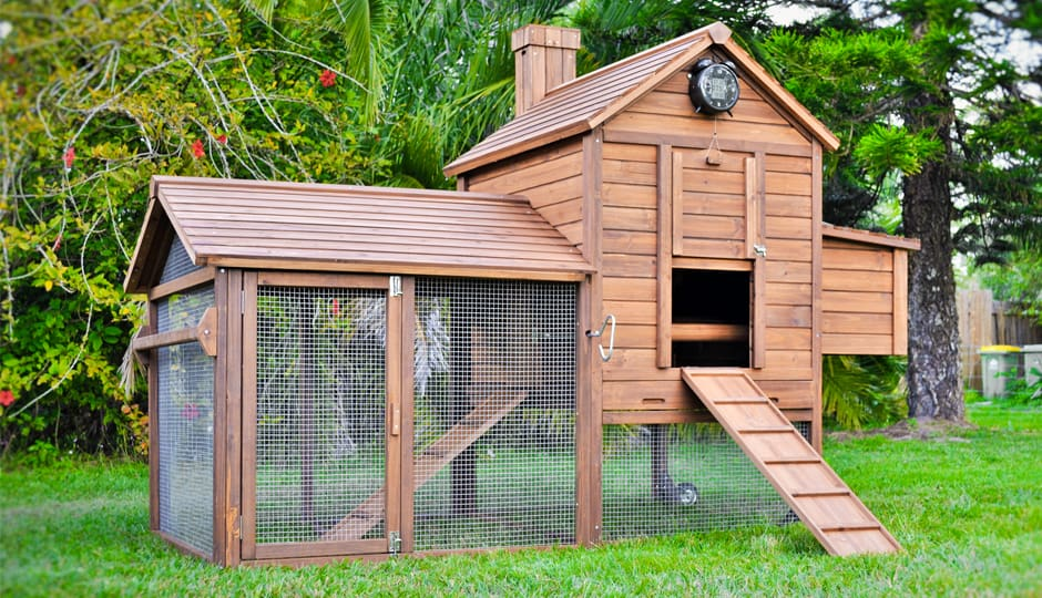 Chicken Coop Accessories Different Types And Uses